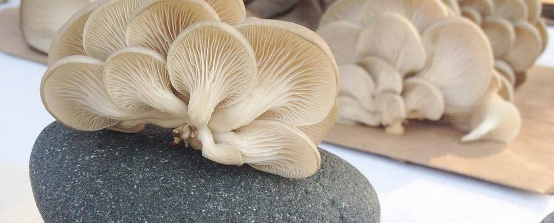 Our Mushrooms – Radically Sustainable Mushroom Cultivation